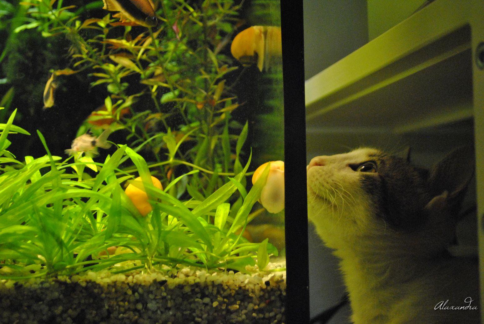 corcodusro-de-alaxandra-romania-de-invatat-pisica-acvariu_DSC6035