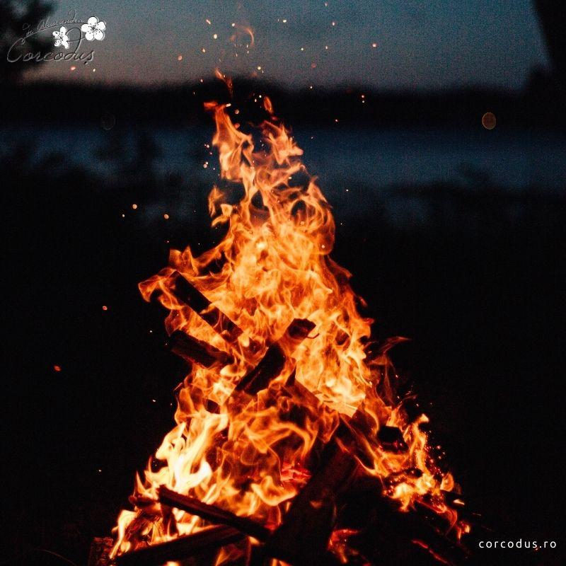 focul – corcodus